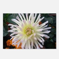 white beauty Postcards (Package of 8)