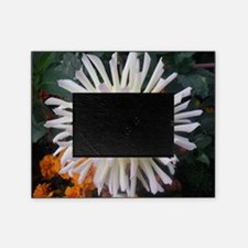 white beauty Picture Frame