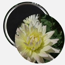 a row of white flowers Magnet