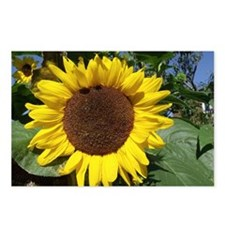 sunflower awake Postcards (Package of 8)
