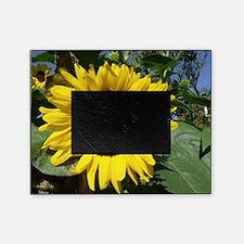 sunflower awake Picture Frame