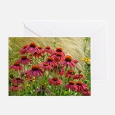 Pink echinacea flowers Greeting Card
