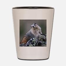 Marmot Shot Glass