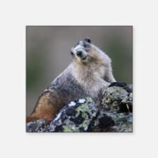 "Marmot Square Sticker 3"" x 3"""