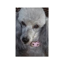 Mercedes Silver Poodle Rectangle Magnet