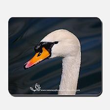 Mute Swan Portrait Mousepad