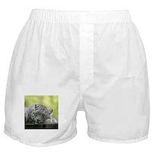 Unique Big cat Boxer Shorts