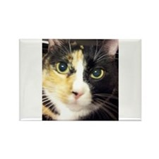 Calico Cuddles Magnets