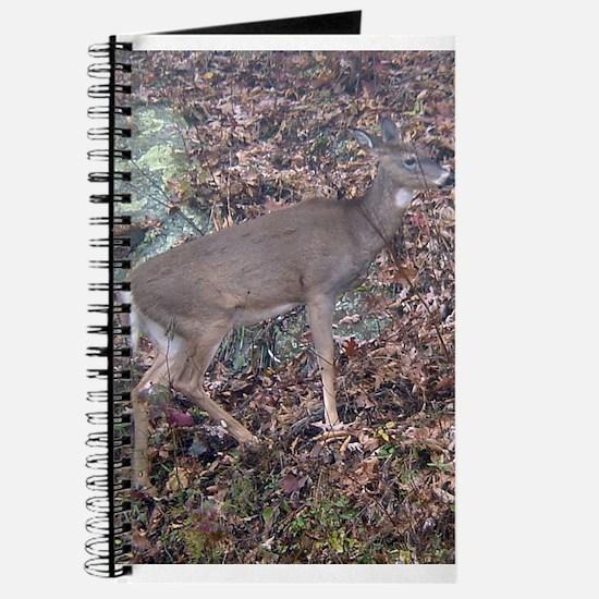 white tail doe Journal