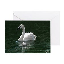 Trumpeter Swan Reflecting Greeting Card