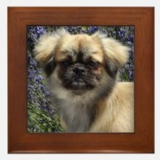 Faithful Tibetan Spaniel Framed Tile