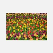 Colorful spring tulips garden Rectangle Magnet
