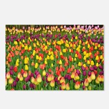 Colorful spring tulips ga Postcards (Package of 8)