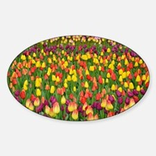 Colorful spring tulips garden Sticker (Oval)