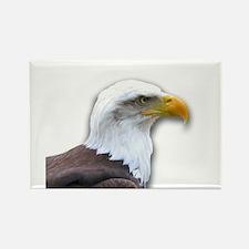 Bald Eagle profile Magnets