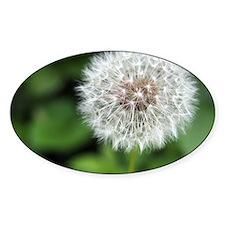 Dandelion Puff Decal