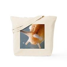 Slug on a Table Tote Bag