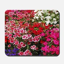 Colorful carnation flower garden Mousepad