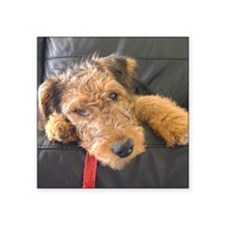 """Earnest the Airedale Square Sticker 3"""" x 3"""""""