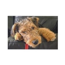 Sleepy Airedale Earnest Magnets