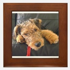 Sleepy Airedale Earnest Framed Tile