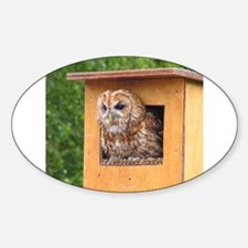 Brown Owl Decal