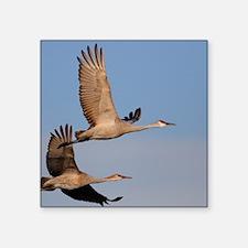 """cranes in flight Square Sticker 3"""" x 3"""""""