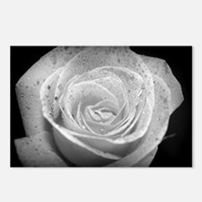 Black and White Rose Postcards (Package of 8)