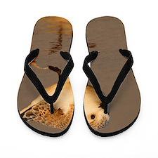 Sand Piper Flip Flops