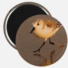 Sand Piper Magnet