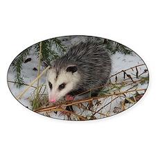 Snow Possum Decal