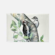 Downy Woodpecker Magnets