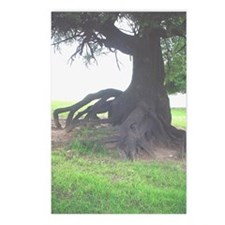 Texas Tree Postcards (Package of 8)