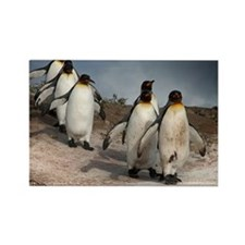 March of the Penguins Rectangle Magnet