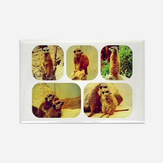 Meerkat Collage Rectangle Magnet
