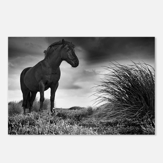 Black Beauty Postcards (Package of 8)