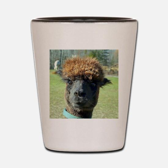 Black alpaca Shot Glass