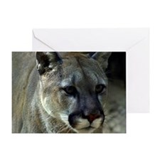 Young Cougar Greeting Card