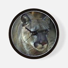 Young Cougar Wall Clock
