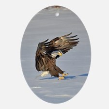 Eagle landing in snow Ornament (Oval)