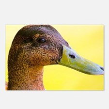 Duck :D Postcards (Package of 8)