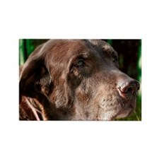 Chocolate Lab Buddy Rectangle Magnet