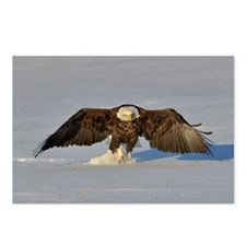 Eagle running Postcards (Package of 8)
