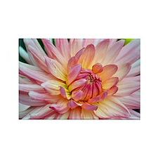 Beautiful pink dahlia Rectangle Magnet