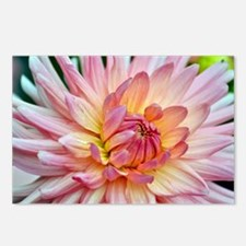Beautiful pink dahlia Postcards (Package of 8)
