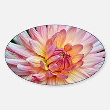Beautiful pink dahlia Decal