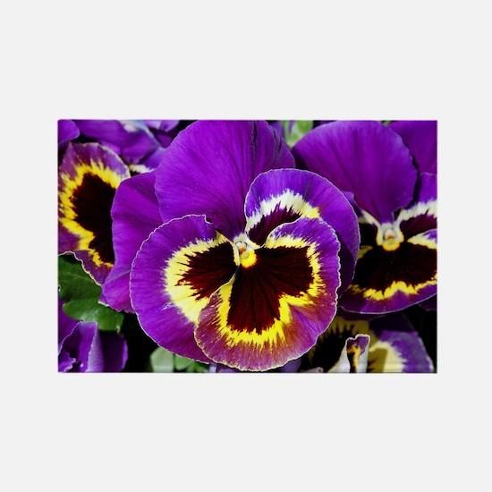 Beautiful purple pansy Rectangle Magnet
