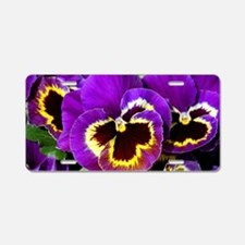 Beautiful purple pansy Aluminum License Plate