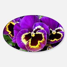Beautiful purple pansy Decal