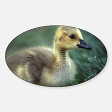 baby goose Decal